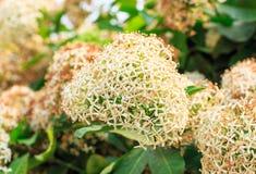 Weiße und gelbe kleine Blumen im Naturhintergrund Lizenzfreie Stockfotografie