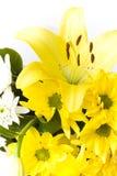 Weiße und gelbe Pelargonie- und Liliumblumen Stockfoto
