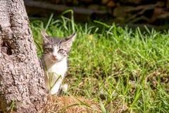 Weiße und graue kleine Katze hinter einem Baum stockfotografie