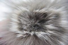 Weiße und graue Pelzturbulenz stockfotos