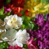 Weiße und mehrfarbige Lilienblumen auf unscharfem Hintergrundabschluß oben, Weichzeichnungslilien-Blumenanordnung lizenzfreie stockbilder