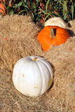 Weiße und orange pumkins über Stroh Lizenzfreie Stockfotografie