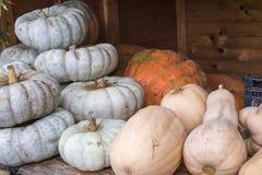 Weiße und orange pumpkings wundern sich und Butternut Lizenzfreie Stockfotos