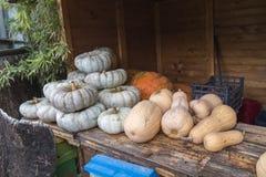 Weiße und orange pumpkings wundern sich und Butternut Stockfotos