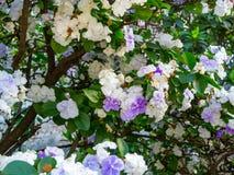 Weiße und purpurrote Blumen lizenzfreie stockfotos
