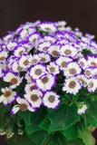 Weiße und purpurrote Blumen in einem Blumenstrauß stockfotos