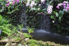 Weiße und purpurrote Orchidee nahe dem Wasserfall Lizenzfreie Stockfotos