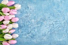 Weiße und rosa Tulpengrenze auf blauem Hintergrund Kopieren Sie Raum, Draufsicht Geburtstag, Mutter-Tag, Valentine Day Stockbilder