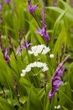 Weiße und rosafarbene Blumen Lizenzfreies Stockbild