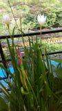 Weiße und rosafarbene Blumen lizenzfreie stockfotos