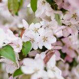 Weiße und rosafarbene Blumen Stockfotografie