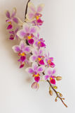 Weiße und rosafarbene Orchidee Stockbild