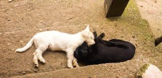 Weiße und schwarze Hunde Stockfotografie