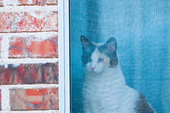 Weiße und schwarze Katze, die heraus Fenstergitter schaut Lizenzfreies Stockbild