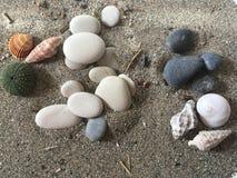 Weiße und schwarze SteinSeeigel-ADN-Oberteile auf dem Sand Lizenzfreie Stockfotos