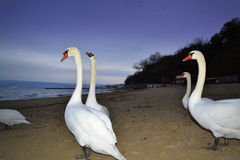 Weiße Vögel auf Abendstrand Lizenzfreies Stockbild