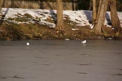 Weiße Vögel, Schnee im Wald - Frankreich lizenzfreie stockfotos