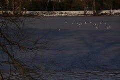 Weiße Vögel und der eiskalte See - Vorderansicht - Frankreich Lizenzfreies Stockbild