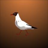 Weiße Vogelseemöwe stock abbildung