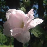 Weiße vorzügliche Blume in der Sommerzeit stockbild