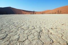 Weiße Wüste - Deadvlei Stockbild