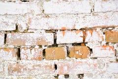 Weiße Wand des alten alten Ziegelsteines mit Moos Ziegelstein-Beschaffenheit der alten Wand lizenzfreies stockbild