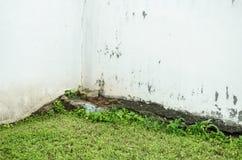 Weiße Wand mit grünem belaubtem Boden, defekter weißer Beschaffenheit einer alten und abgenutzten Wand stockbilder