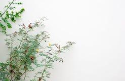 Weiße Wand und Baum Stockfotografie