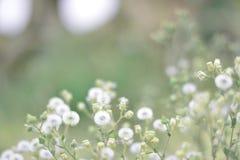 Weiße weiche Blumen Stockbild