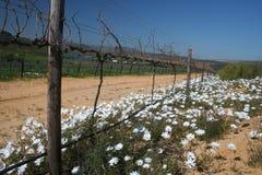 Weiße wilde Blumen Stockfotos