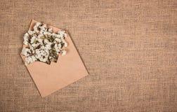 Weiße wilde Blumen in einem Papierumschlag Hintergründe und Beschaffenheiten Kopieren Sie Platz Lizenzfreies Stockbild