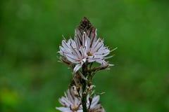 Weiße wilde Blumen mitten in dem Wald im grünen Gras lizenzfreie stockfotos