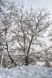 Weiße Winterbäume Lizenzfreie Stockbilder
