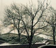 Weiße Winterbäume Lizenzfreies Stockbild