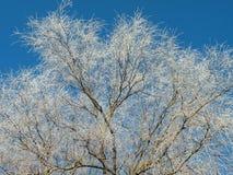 Weiße Winterbäume, Litauen Lizenzfreies Stockbild