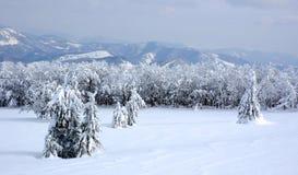 Weiße Winterlandschaft Stockfotografie