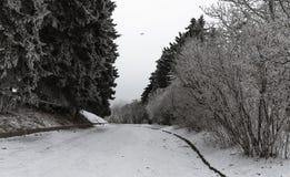 Weiße Winterlandschaft im Schnee und in einer kurvenreichen Straße Lizenzfreie Stockfotos