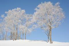 Weiße Winterlandschaft mit einem schneebedeckten Baum Stockfotografie