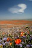 Weiße Wolke über Frühlingsblumen Lizenzfreies Stockfoto