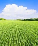 Weiße Wolke über grünem Feld Stockbild