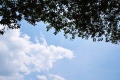 Weiße Wolken über den Bäumen Stockbilder
