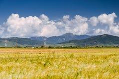 Weiße Wolken über einem gelben Erntefeld Stockfoto
