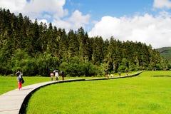 Weiße Wolken, Gebirgswald, Wiese, Shangri-La Landschaft stockfotografie