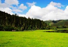 Weiße Wolken, Gebirgswald, Wiese, Shangri-La Landschaft Stockfotos