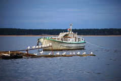Weiße Yacht und Seevögel Lizenzfreies Stockbild