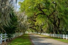 Weiße Zaunstraße, spanisches Moos, Frühling, Louisiana stockbild