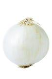 Weiße Zwiebel Stockbild