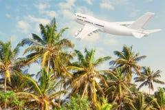 Weißen Jet Passengers Flugzeug, das über tropische Palmen O fliegt Lizenzfreie Stockbilder