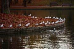 Weißer Angriff der Vögel Stockbild