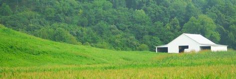Weißer Bauernhof und grünes Gras Stockbild